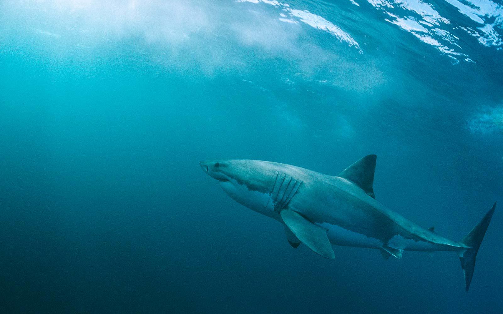 все про акул фото