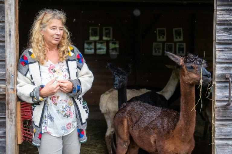 Alpaca owner Silke Lederbogen has a farm with about 50 of the animals and uses their wool to make hats and blankets