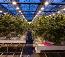 Pot Stocks Tumble in First Hours of Canada's Legal Weed Market
