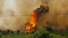 Fires triple in Brazil's Pantanal wetlands in 2020