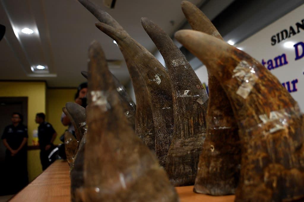 Seized rhino horns displayed at a press conference in Malaysia last year. (AFP Photo/MANAN VATSYAYANA)