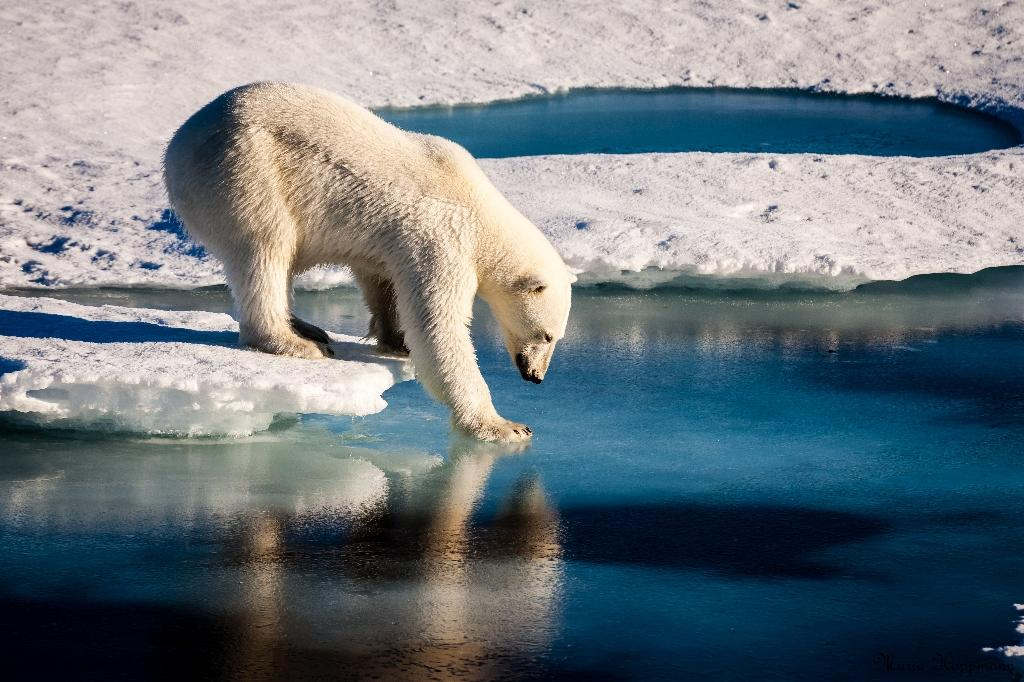 Persistent heat records have rattled the fragile Arctic for each of the past five years, a record-long warming streak, said the 2018 Arctic Report Card, released by the National Oceanic and Atmospheric Administration (AFP Photo/Mario HOPPMANN)
