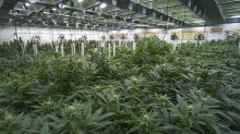 Marijuana Stocks: Another Weed SPAC Deal, GrowGeneration Buys Char Coir