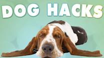 5 Tricks All Dog Owners Should Know