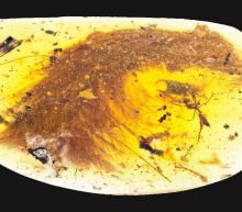 Feathered dinosaur tail found encased in amber