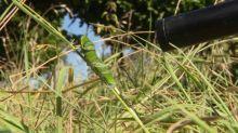 """Une petite chenille dévoile """"Les mondes invisibles"""" des insectes dans un documentaire en tournage dans l'Aveyron"""