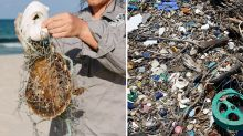 Dead baby turtle found in 12 tonnes of rubbish removed from beach