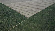Brasil a caminho de ser o maior produtor de soja do mundo