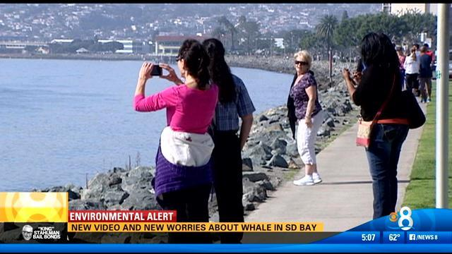 New video, new worries about whale in San Diego Bay