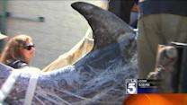 Rare Dolphin Rescued After Beaching Itself off Manhattan Beach
