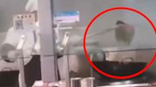 Shocking video reveals chef's 'disgusting' act