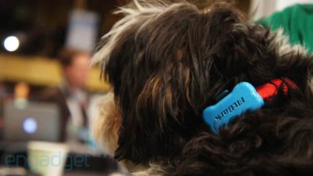 FitBark monitors your dog's 'BarkScore,' we go eyes-on (video)