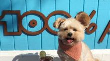 A foodie tour of LA with Popeye the Instagram dog