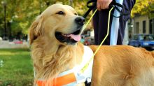 A woman's tweet about what to do if you're approached by an unaccompanied service dog has gone viral