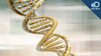 5 Genetic Discoveries in 2013 - Discovery News