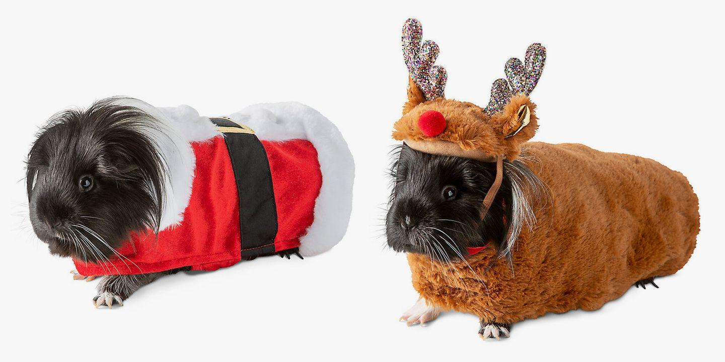 Petsmart S Christmas Costumes Will Make Your Guinea Pig The Most Festive Pet
