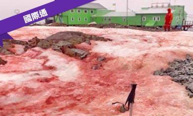 南極雪地一片血紅 科學家示警