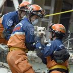 Dog rescued from rubble of collapsed apartment block six days after Mexico City earthquake