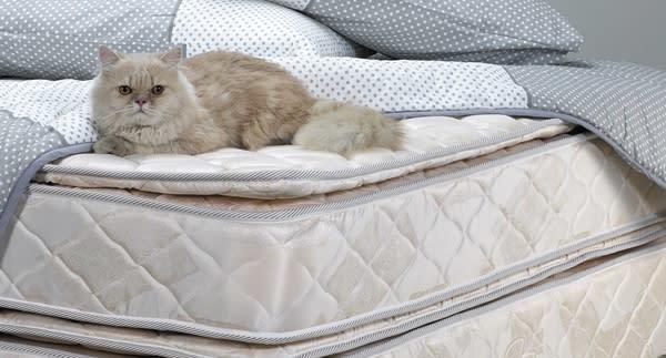 哪裡有最優質【🔍床褥推介】?