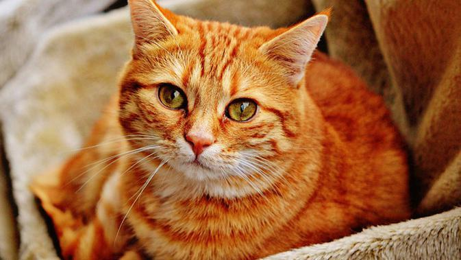 50 Nama Kucing Betina Lucu Mudah Diingat Dan Menggemaskan