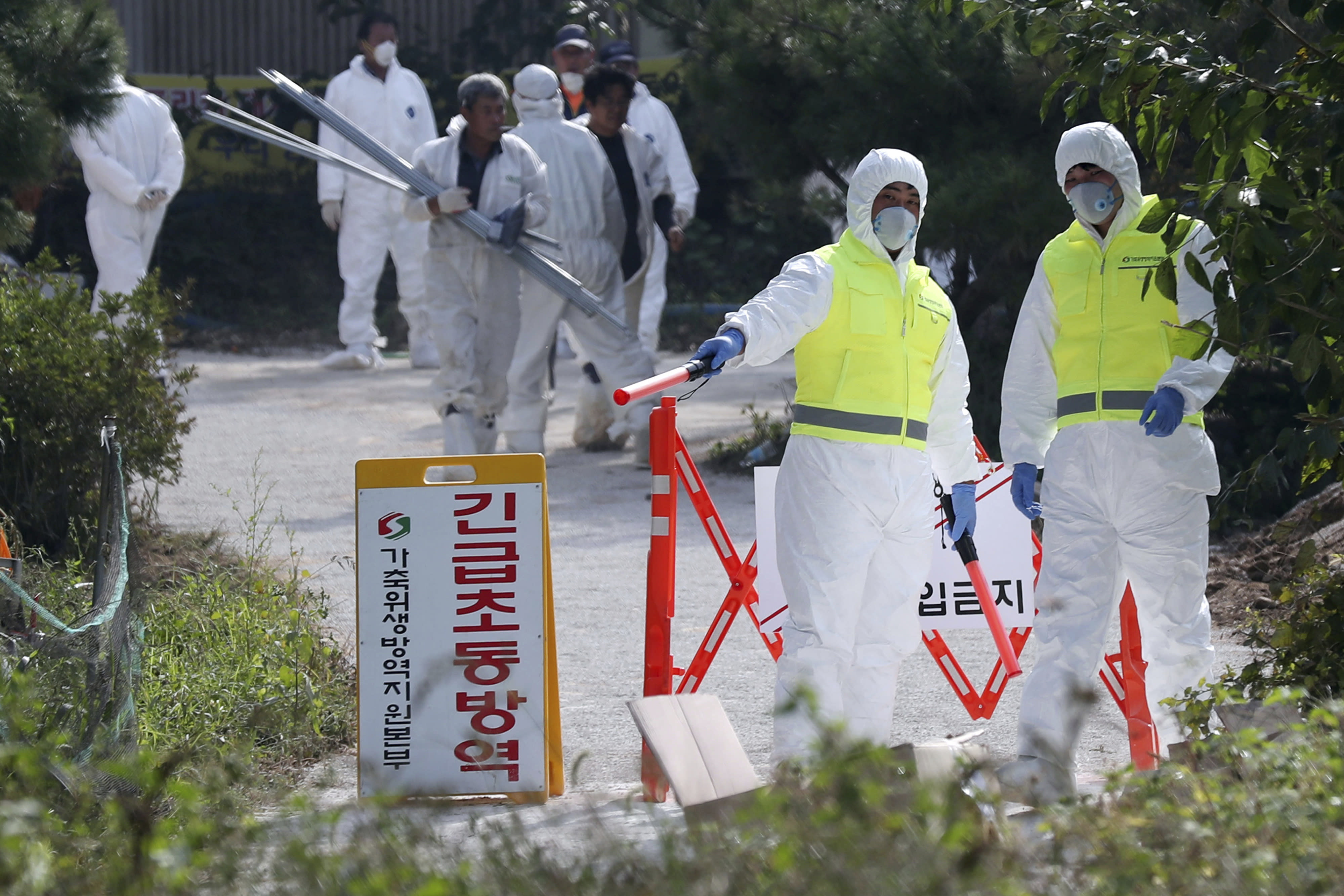 """Quarantine officials control access to a pig farm with confirmed African swine fever in Ganghwa, South Korea, Wednesday, Sept. 25, 2019. South Korean on Wednesday said it was intensifying efforts to clean farms around the country as it scrambles to contain the spread of the highly contagious African swine fever that has ravaged farms near its border with North Korea. The notice reads: """"Under quarantine."""" (Yun Tae-hyun/Yonhap via AP)"""