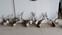 'Poaching spree' gets man banned from hunting in 48 states, Colorado officials say