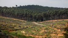 India's May palm oil imports jump 65%, soyoil imports plunge - trade body