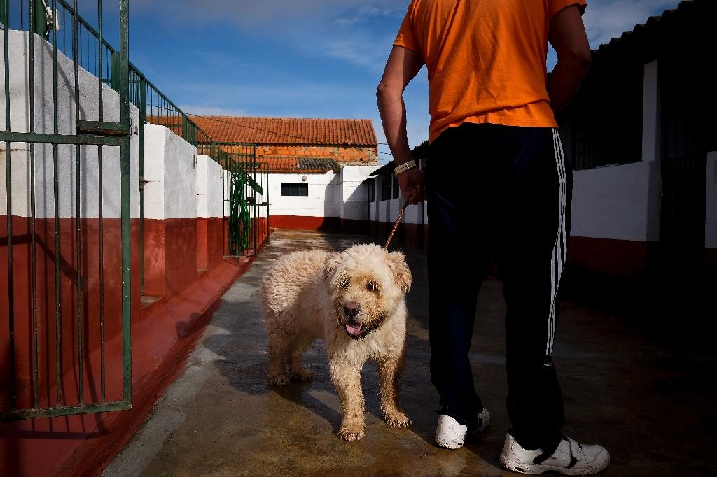 Those who can work at the kennel are selected from the approximately 20 prisoners who have been assigned to a less restrictive regime due to good behaviour (AFP Photo/Patricia de Melo Moreira)