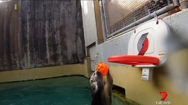 Otter shows off basketball skills