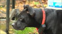 Dog's Find of Human Leg Prompts Police Search