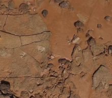 Dinosaur Tracks Are Hiding Under The Tides In Australia