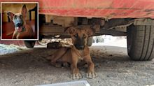 Dog's 'drastic change' as it struggles to survive