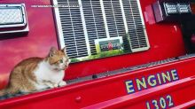 Firefighters rescue stray cat named Flame before realizing he actually rescued them