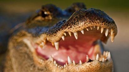 Meth gators? Cops warn about flushing drugs