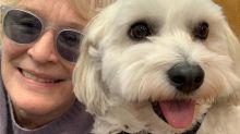 El perro de Glenn Close tiene su propio Instagram y miles de seguidores