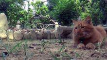 El conmovedor caso de la gata que va todos los días a la tumba de su humano fallecido hace 2 años