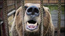 A History of Bear Markets
