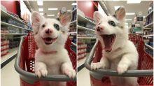 超可愛狗狗遊超市 表現超興奮Twitter熱傳惹爭議
