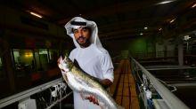 Dubái cría salmones en pleno desierto