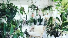 The best hanging plants for lazy, beginner and interiors-obsessed gardeners
