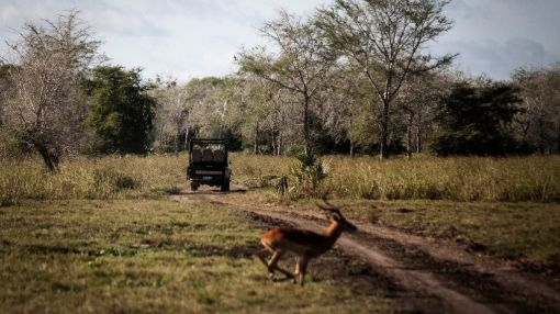 Conflict and drought threaten Mozambique's Gorongosa park