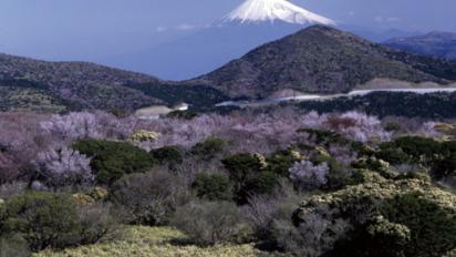 2020日本賞櫻攻略🌸教你分8大日本櫻花種類,哪個賞櫻地點看到最多櫻花品種?