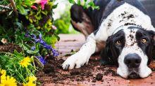 Hunde: Amazon-Kunden sind von praktischem Pfotenreiniger überzeugt