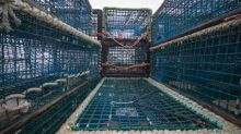 2 N.S. lobster fishermen take licence fights with DFO to court