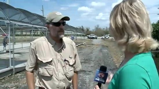 Citrus Crop Affected By Isaac