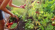 """""""Anche le piante provano dolore"""". La scoperta dei ricercatori di Tel Aviv"""