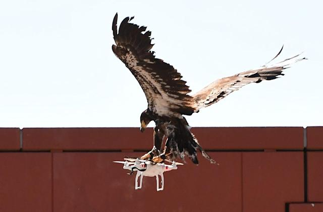 Dutch police retire convocation of drone-catching eagles