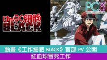 動畫《工作細胞 BLACK》首部 PV 公開 紅血球冒死工作