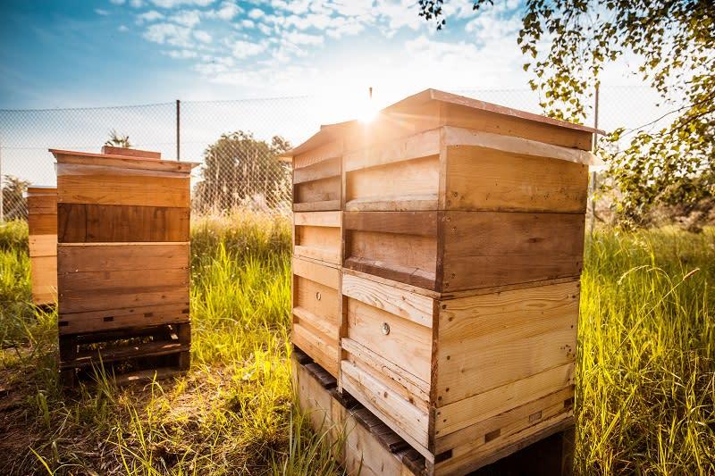 Porsche去年成立第一個養蜂場,地點就選在德國萊比錫越野場,引進約150萬隻蜜蜂