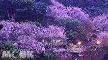 私人花園賞櫻仙境 置身京都櫻花林